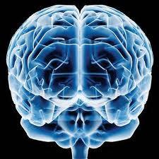 Cérebro, este mistério desconhecido pela Ciência e que gera uma infinidade de teorias