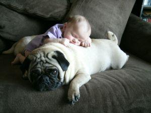 """O """"animal"""" aceita a cria de uma espécie totalmente diferente com carinho, com verdadeiro amor."""
