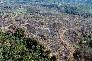 Uma ferida cancerosa na grande floresta amazônica. Culpa dos fazendeiros e dos que os manipulam por detrás das cortinas.