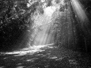 O amanhecer era sempre frio na floresta onde estava a aldeia celta.