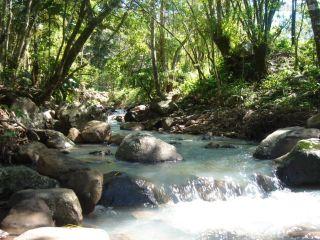 Sinhazinha não sabia, mas nas terras da fazenda Gameleira vários riachos corriam por entre a mata.