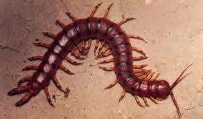 A ferroada dese inseto nojento é mortal para crianças e idosos e dói como o diabo.