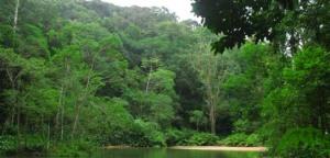 Floresta da Tijuca (que saudades...(www.corcovado.org.br)