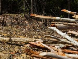 Desmatamento, presente da bancada dos plantadores de soja (foto de jonathan_linsc2b4desmatgamento.jpg)