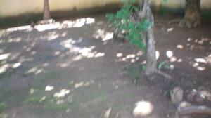 Depois da faxina, o solo ficou uma beleza. Limpinho que dava gosto.