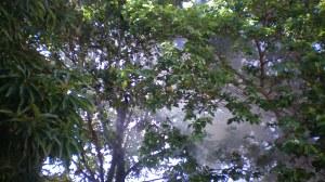 A fumaça logo inundou as copas das mangueiras e da enorme goiabeira. Tudo ficou azul.