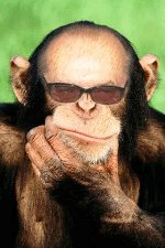 """O """"macaco pensante"""" ainda está às voltas no conhecer-se a si mesmo."""