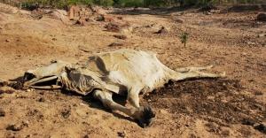 Hoje é a carcaça de um boi no leito seco de um rio. Amanhã serão nossas carcaças (www.blogbodoconanet.com)