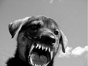 """Se o """"bicho humano"""" é como este cão furioso, arrebentem com ele. Acreditem: ele merece."""