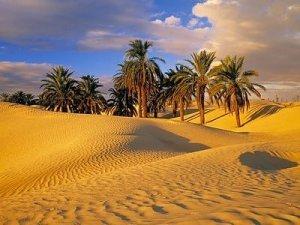 Em torno da água no meio da areia surgem muitas tamareiras.