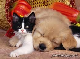 O cão não dá felicidade ao gato e vice-versa. Mas ambos são felizes consigo mesmos e por isto podem conviver em paz.