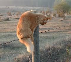 Até os animais pulam a cerca...