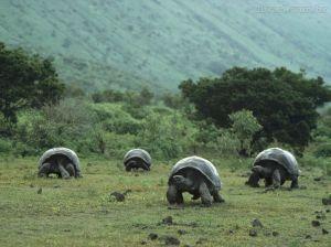 Tartarugas são lentas, mas vivem muito...