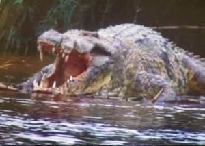 A lembrança do enorme crocodilo devorando seu amigo Kamal assombrava e desorientava Milena Fórcis.