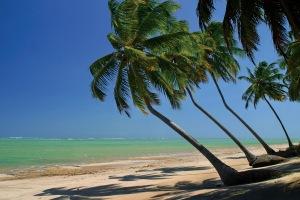 Coqueiros não existiam na ilha da milionária. De onde aqueles vieram?