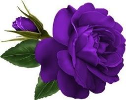 """A flor roxa """"milagrosa""""."""