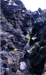 Lapas típicas da misteriosa Ilha de Pargos.