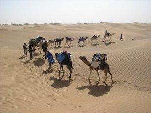 Os séculos passam, mas eles continuam sendo o meio de transporte mais usado no deserto.