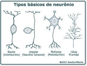 TIPOS ESPECÍFICOS OU BÁSICOS DE NEURÔNIOS EM NOSSO SISTEMA NERVOSO.