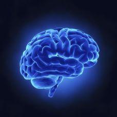A ciência pragmática, profana, dá demasiada atenção a esta estrutura física do corpo humano. É o sinal do quanto estamos atrasados no conhecimento esfíngico.