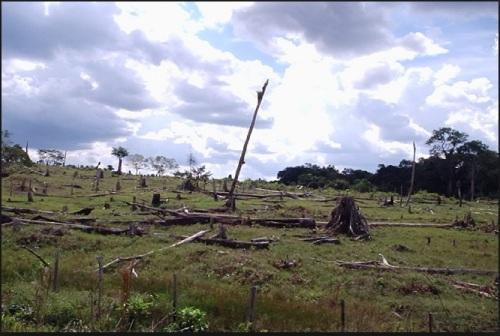 DESMATAMENTO NA AMAZÔNIA - IMAZON FOTO 1