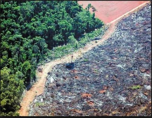 DESMATAMENTO NA AMAZÔNIA - IMAZON FOTO 2