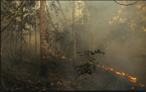 DESMATAMENTO NA AMAZÔNIA - IMAZON FOTO 3