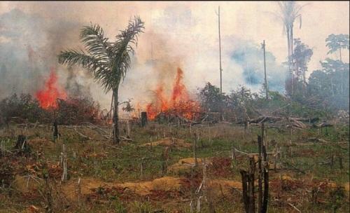 DESMATAMENTO NA AMAZÔNIA - IMAZON FOTO 4