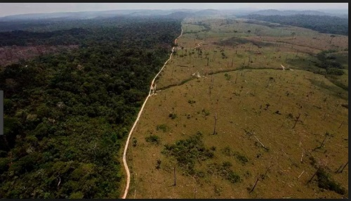 DESMATAMENTO NA AMAZÔNIA - IMAZON FOTO 8