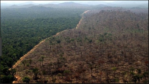 DESMATAMENTO NA AMAZÔNIA - IMAZON FOTO 9